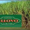Illovo-Suiker
